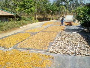 Jahe Kunyit basah & kering, kopra, kopi, arang batok kelapa