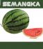 Semangka bulat 01
