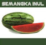 Semangka inul 01